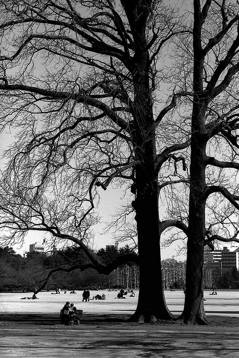 bench under tall tree