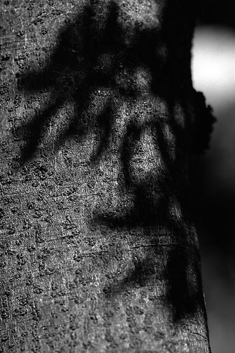 木の幹に落ちた影