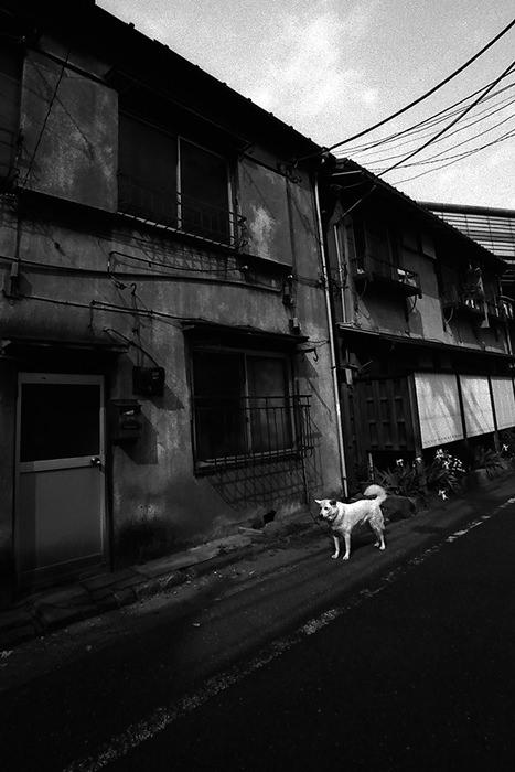 古いアパートの前に立つ犬
