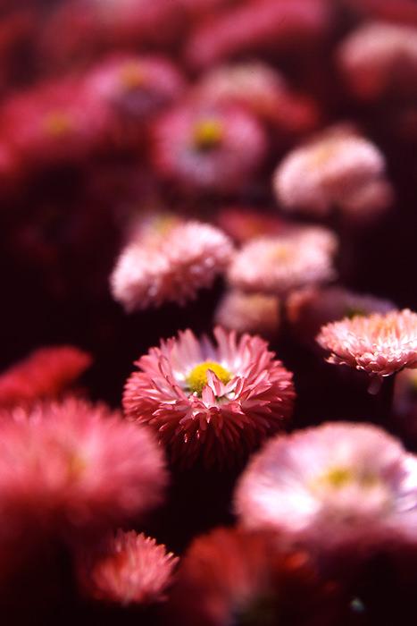 Flowers By The Roadside (Tokyo)