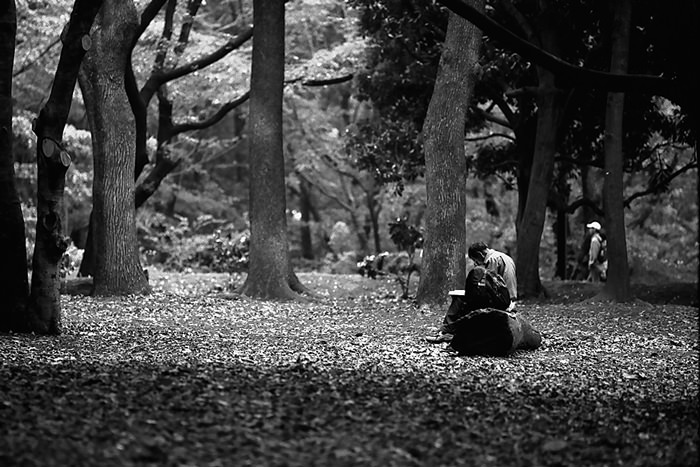 Man reading book in Yoyogi Park