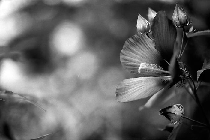 咲いている花