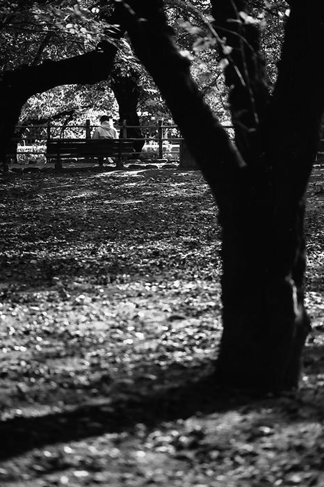 木立の中のベンチ