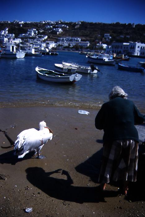 aunt and pelican
