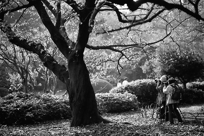 Photographers In The Park (Tokyo)