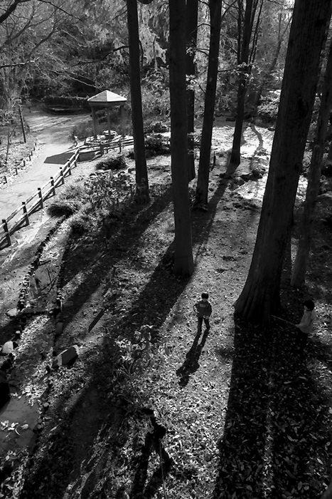 林試の森公園で遊び回る男の子