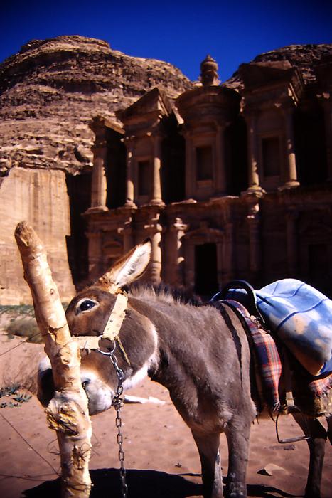 ペトラの驢馬とエド・ディル