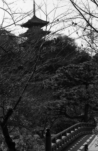 Pagoda And Bridge @ Kanagawa