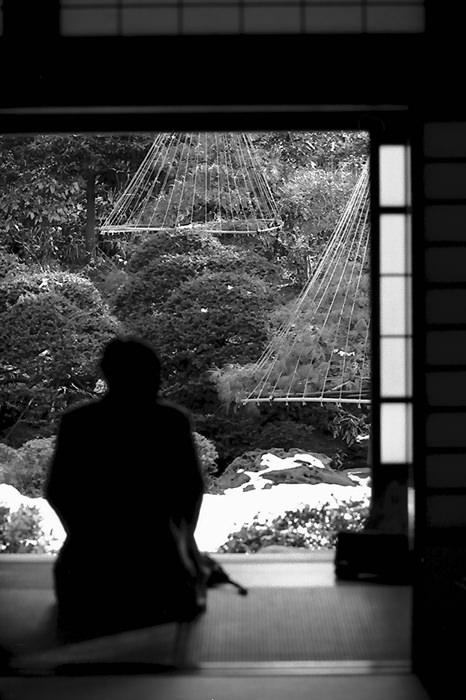 man watching garden