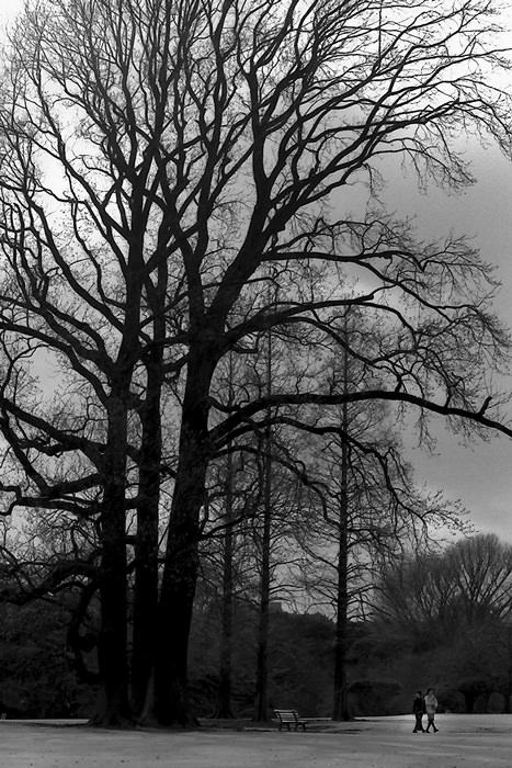 couple walking beside tall tree