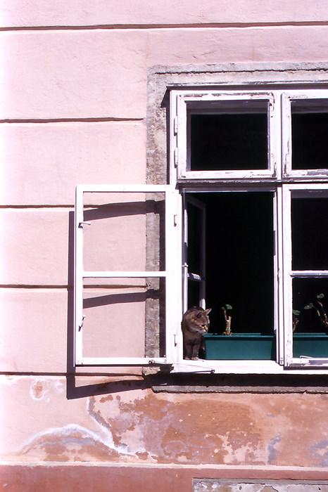 Little cat by window