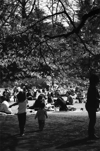 People Enjoying Picnic @ Tokyo