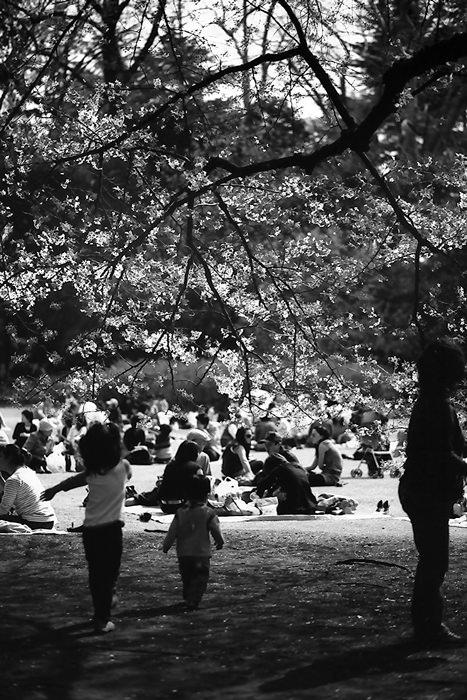 People Enjoying Picnic (Tokyo)