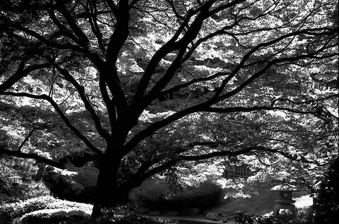 大きく広げた木のシルエット