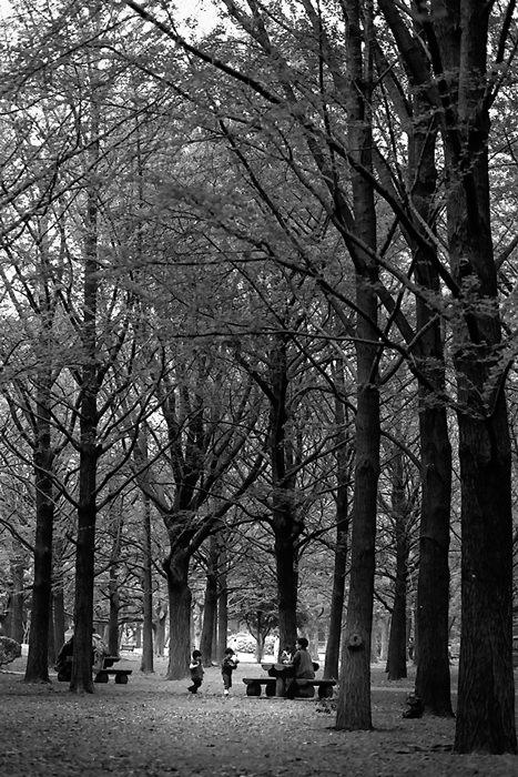 木立の中でピクニックする家族連れ