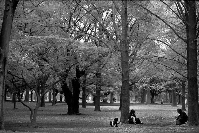 木々の中で休む家族