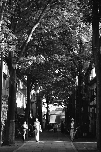 Pedestrian Walking The Approach To The Shrine @ Tokyo
