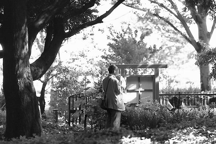 Man in tree shade