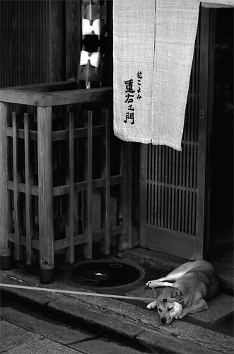 Dog At The Entrance Of A Restaurant @ Kyoto