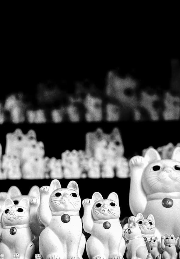 Welcoming cats in Gotoku-Ji
