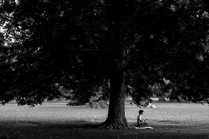 木の下で弾く男