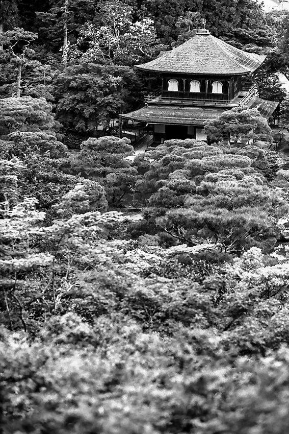木立の中の銀閣寺