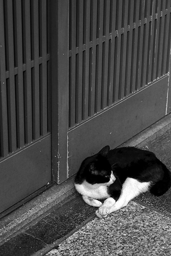 引き戸の前の猫