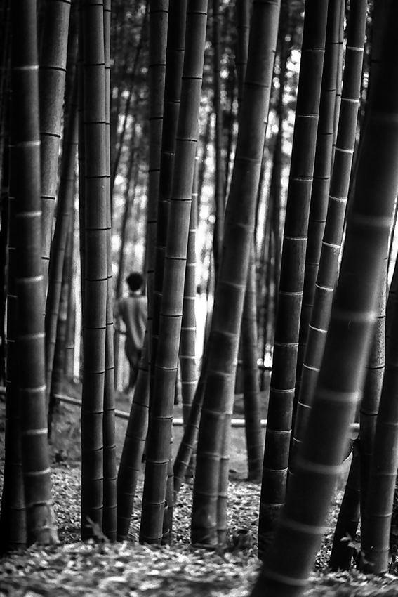 Bush of bamboo in Kodai-Ji