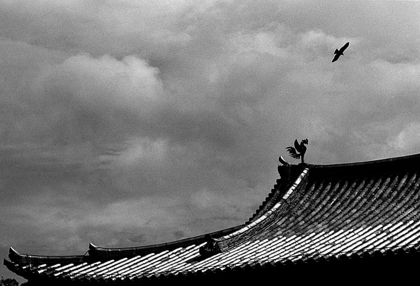 空飛ぶ鳥と平等院の鳳凰