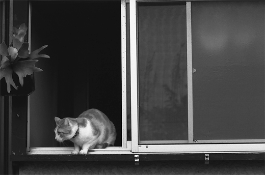 Cat Beside The Window @ Kanagawa