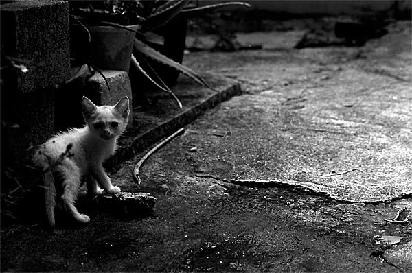 Kitten Looked Back In Dark Corners @ Okinawa