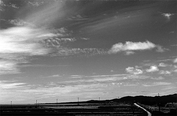 Road Under The Sky In Kohama Island (Okinawa)