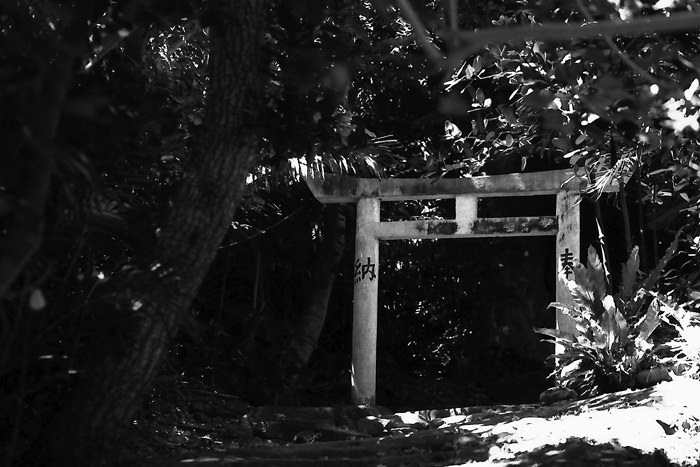 Torii in tree shade