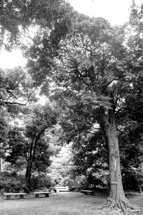 大木とベンチ