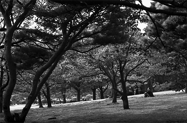 Man Sitting Under Trees @ Tokyo