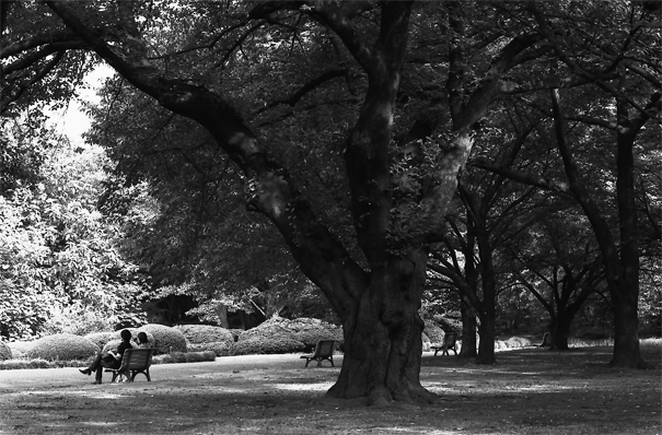 A Thick Trunk And Benches @ Tokyo