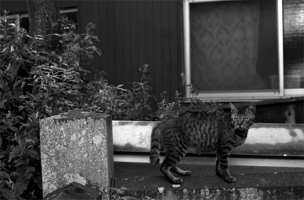 Cat Casting A Sharp Glance (Kagawa)