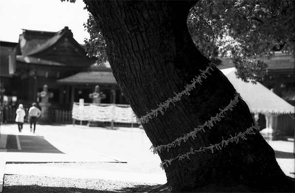 Tree And Many Fortune Slips (Kagawa)