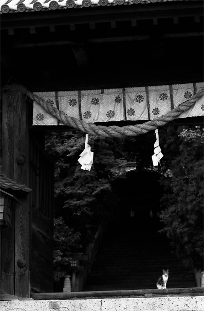 Cat, The Gate And A Rope @ Okayama