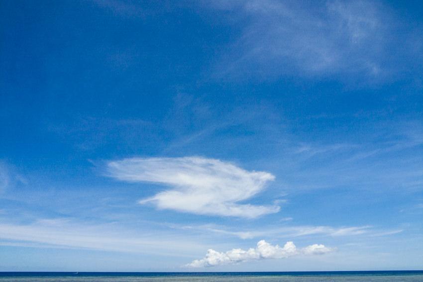 Cloud like bird
