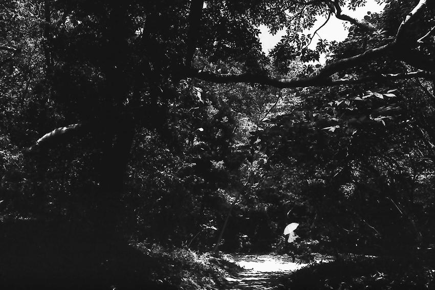 木立の中を歩く傘