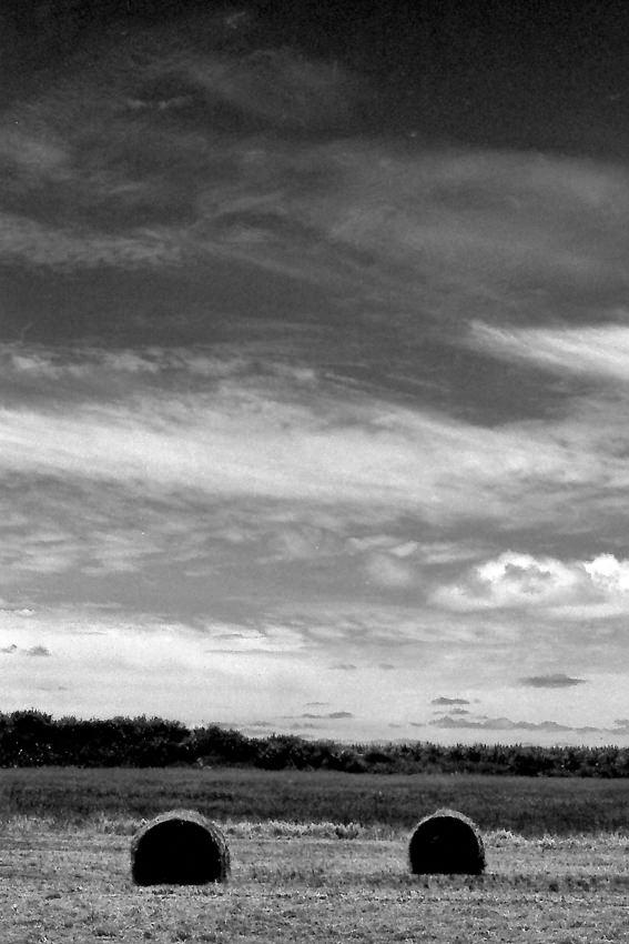 小浜島の牧草ロール