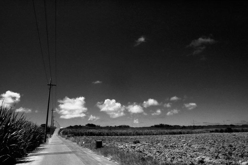 畑の中の道