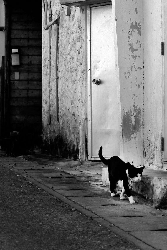 Cat walking lane
