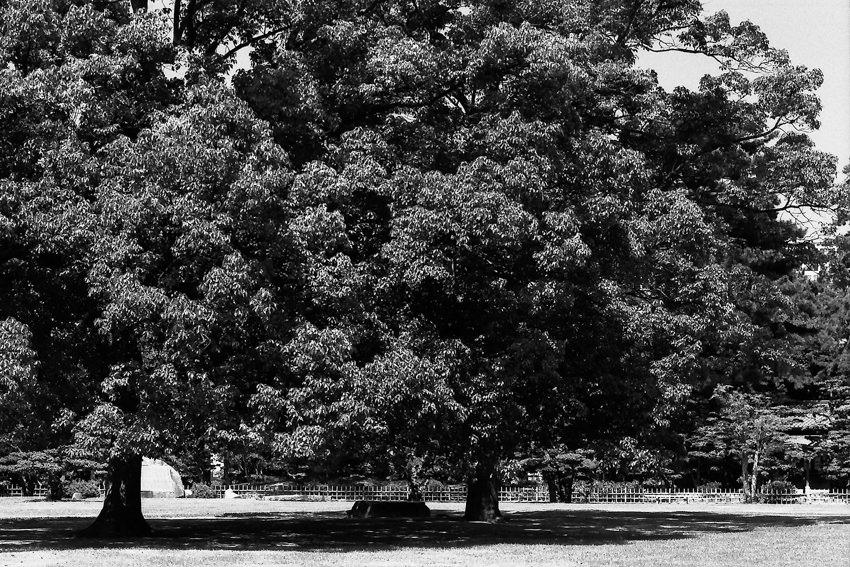栗林公園の木