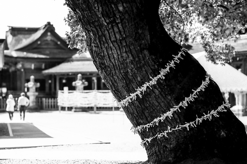 木に括り付けられたおみくじ
