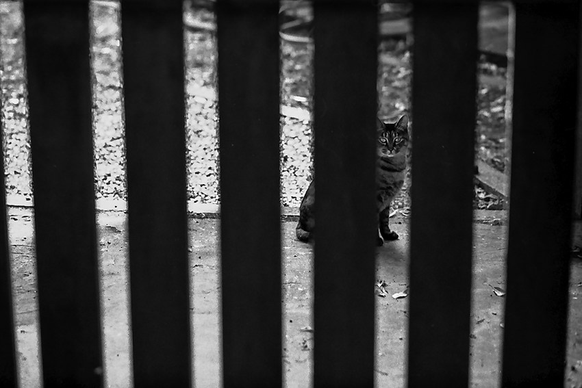 cat on other side of fence