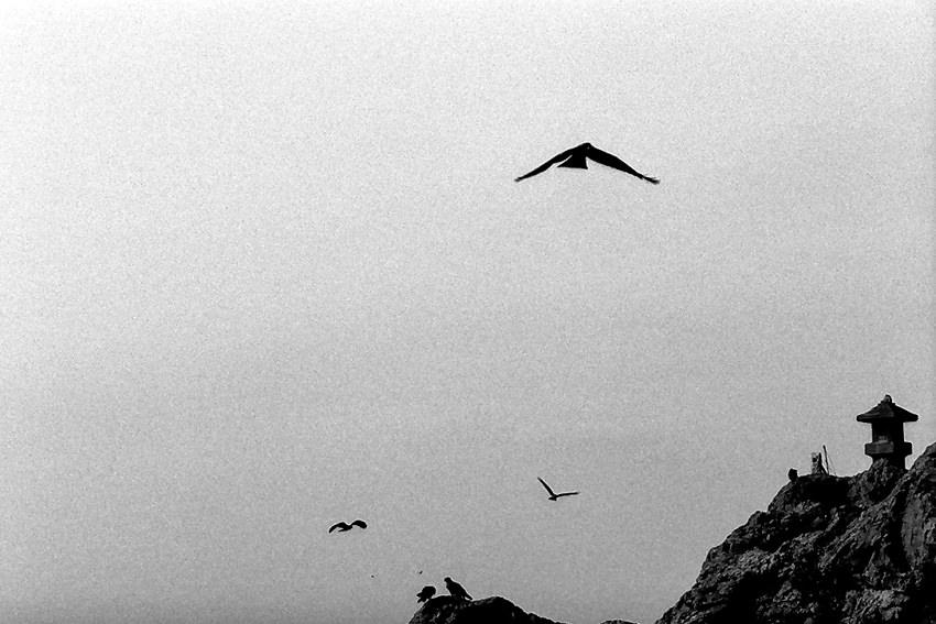 石灯籠の周りを飛び回る鳥