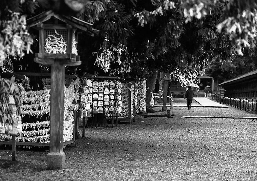 Umbrella walking in precinct of Izumo Taisha Shrine