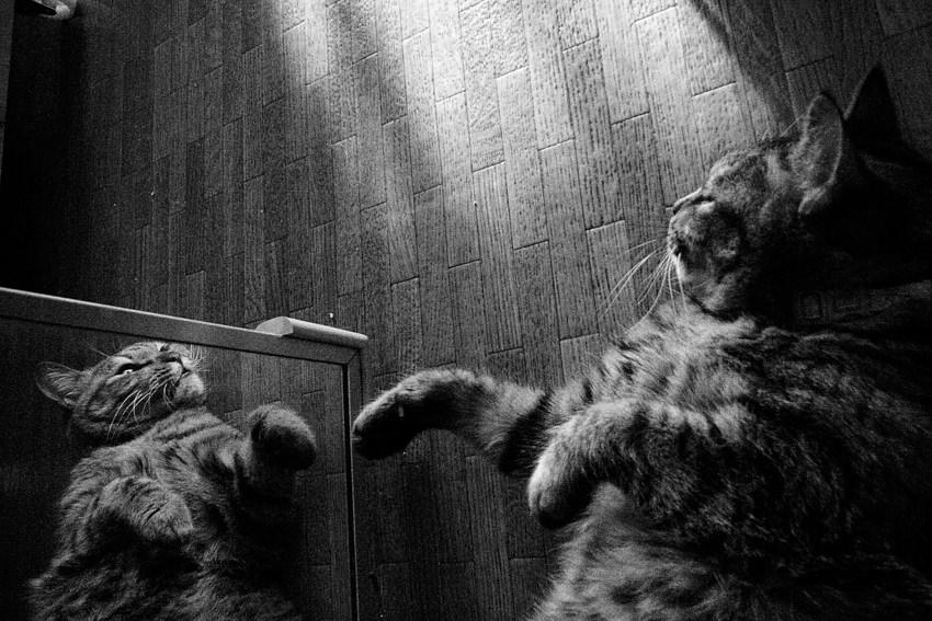 鏡の中の猫